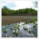 早春の天生高層湿原