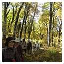 秋のブナ原生林を歩く