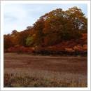 草紅葉の天生高層湿原