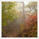 紅葉の小道1