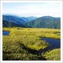 キンコウカに彩られた池塘(9月)