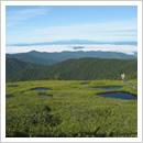 咲きはじめたキンコウカと池塘群(8月)