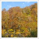 万波上林道の紅葉(10月)
