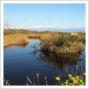 秋の白木池塘1(浮島のある池塘)(10月)
