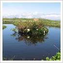 浮島のある池塘(6月)