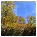 万波高原の秋の装い