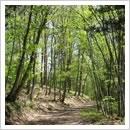 新緑の流葉カントリーウォークコース(5月)