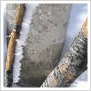 エビのしっぽ(木の枝の風上側にできた氷の結晶)(1月)