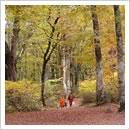 秋の森を行く(10月)