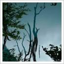 不思議な湖面(6月)