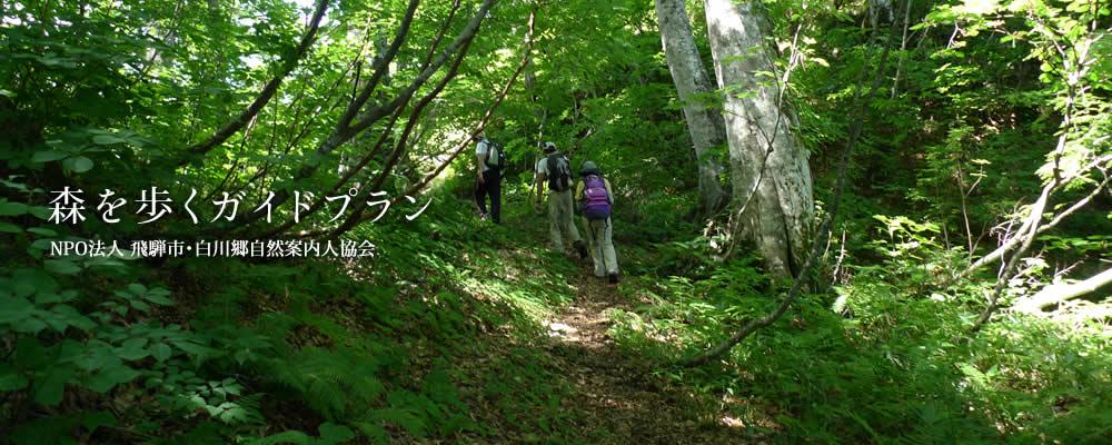 森の案内人によるガイドのご案内
