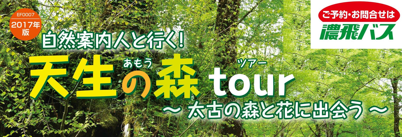 自然案内人と行く!天生の森tour ~太古の森と花に出会う~